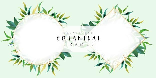 Cornici botaniche eucalyptus