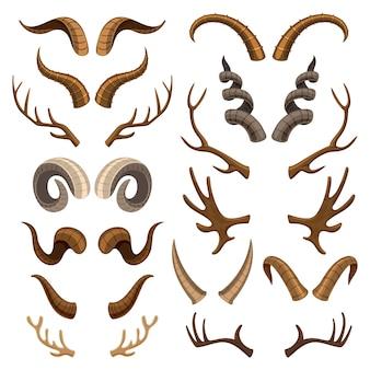 Corno cornuto animale selvatico e corna di cervo o antilope illustrazione set di trofeo di caccia cornea di renne isolato su sfondo bianco