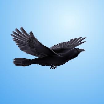 Corvo nero