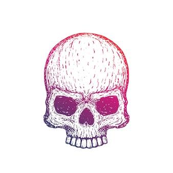 Cranio disegnato a mano