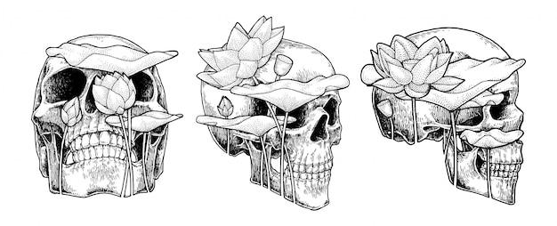 Cranio e loto, illustrazione astratta disegnata a mano