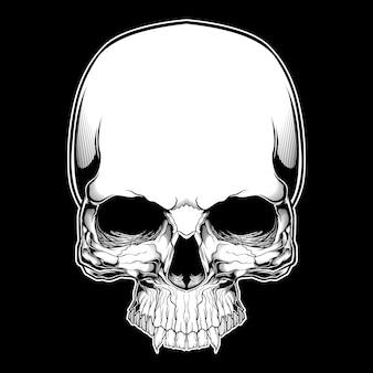 Cranio retrò, vintage, dettaglio disegno a mano