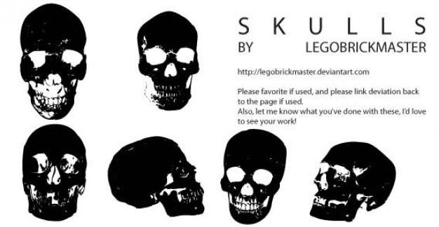 Cranio vettori