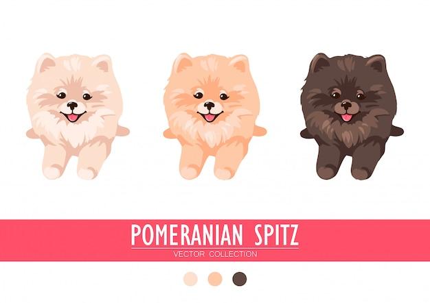 Crema di spitz pomeranian, arancione e scuro isolato su sfondo bianco. simpatici cuccioli di poms. piccolo spitz tedesco. cagnolini