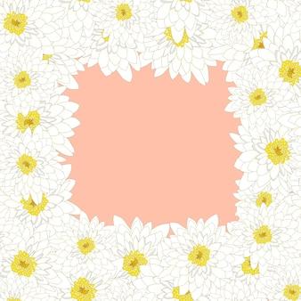 Crisantemo bianco bordato