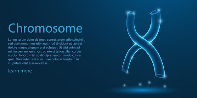 Cromosoma umano, struttura a forma di x.