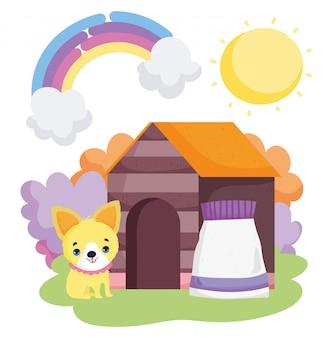 Cuccioli e pacco alimenti fuori animali domestici