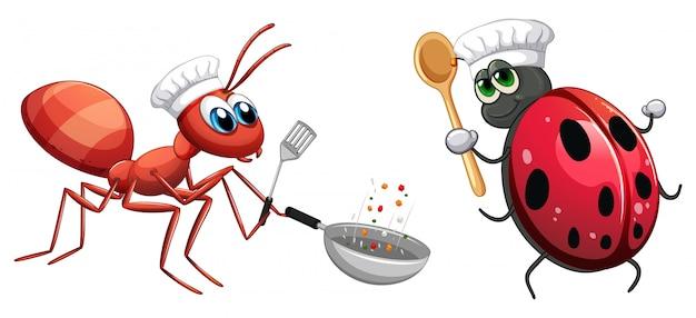 Cuoco unico dell'insetto che cucina alimento