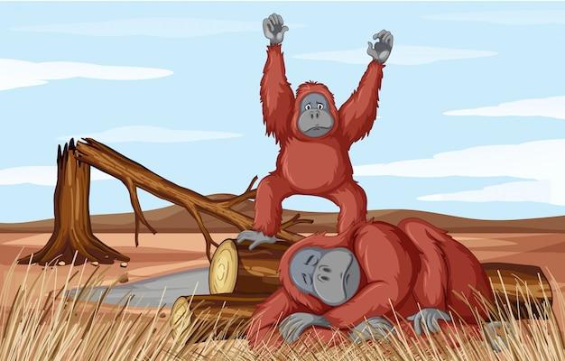Deforestazione con due scimmie