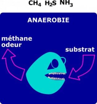 Degrado anaerobie