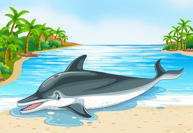 Delfino sdraiato sulla riva
