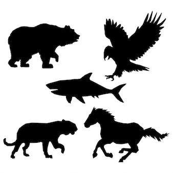 Design degli animali