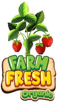 Design dei caratteri per la parola fattoria fresca con fragole rosse