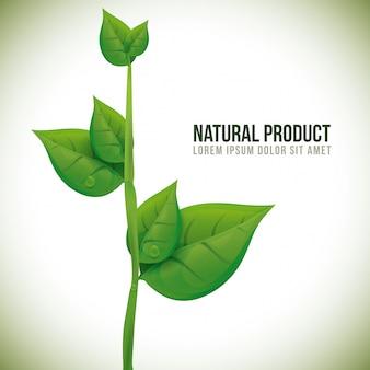 Design del prodotto naturale.