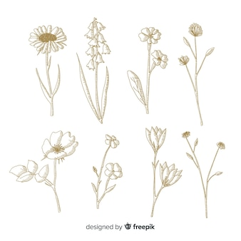 Design minimalista per fiori botanici