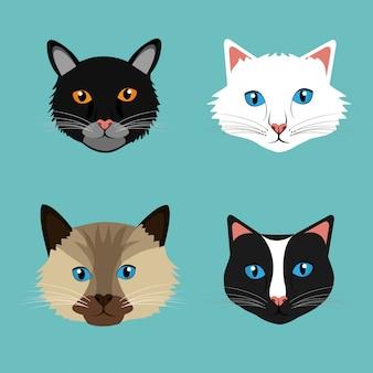 Design per animali domestici.