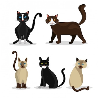 Design per animali domestici.
