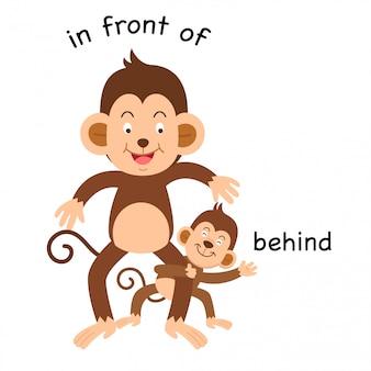 Di fronte dietro e di fronte all'illustrazione