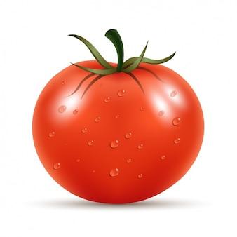 Di pomodoro fresco