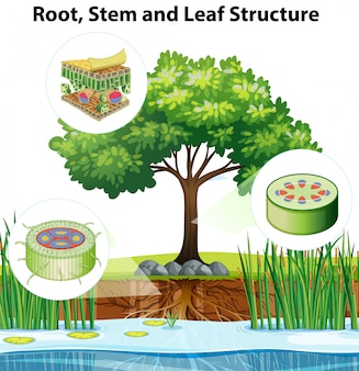Diagramma che mostra in dettaglio la struttura delle piante