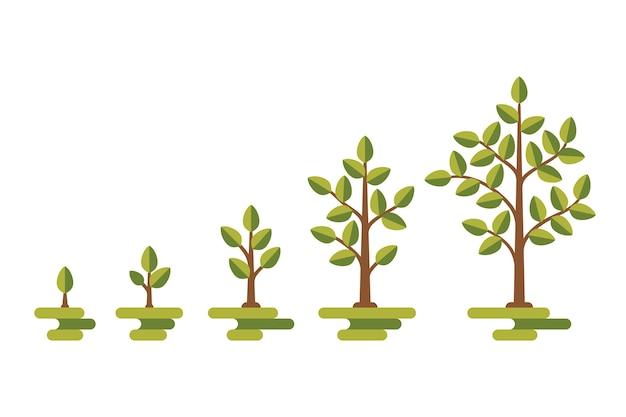 Diagramma vettoriale di crescita albero verde