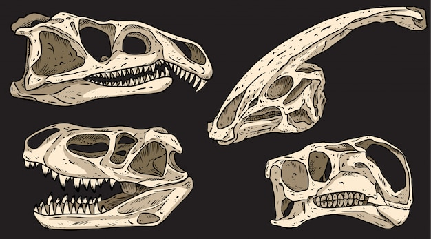 Dinosauri su un bordo nero disegnato a mano teschi colorati scarabocchi. raccolta di immagini di fossili carnivori ed erbivori. illustrazione di riserva
