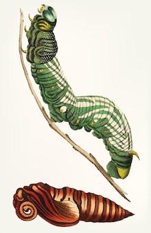 Disegnata a mano della sfinge di annona