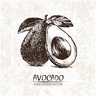 Disegnata a mano disegno di avocado