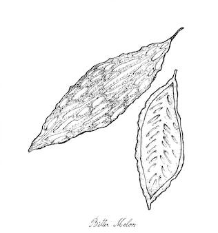Disegnato a mano di fresco verde melone amaro