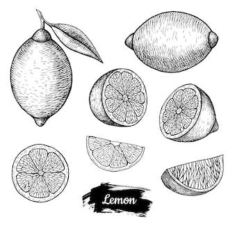 Disegnato a mano di limone