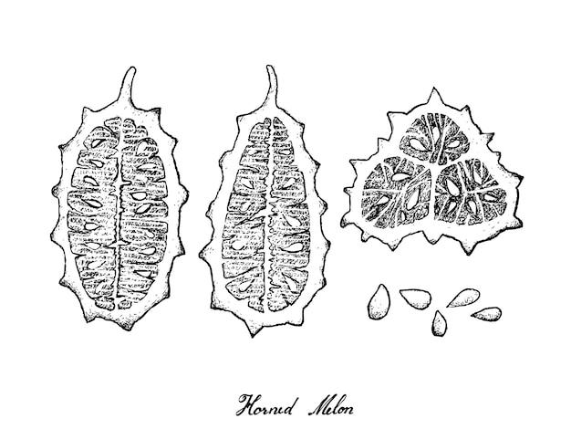 Disegnato a mano di mel cornuto o kiwano