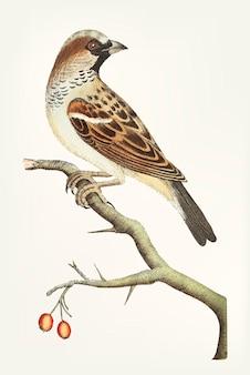 Disegnato a mano di passero