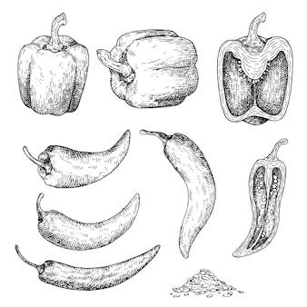 Disegnato a mano di pepe.