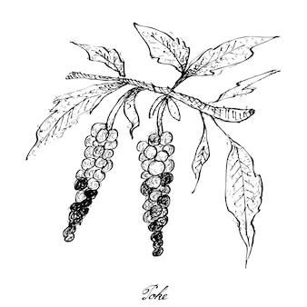 Disegnato a mano di poke su sfondo bianco