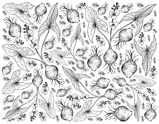 Disegnato a mano di punta di freccia a foglia larga su sfondo bianco