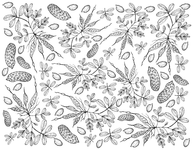 Disegnato a mano di sfondo di piante di arachidi fresche