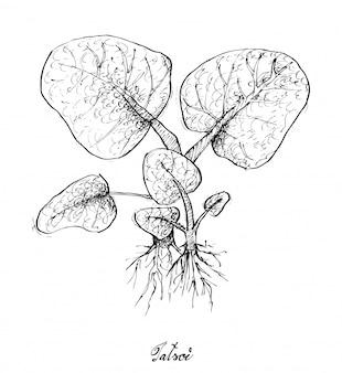 Disegnato a mano di tatsoi su priorità bassa bianca