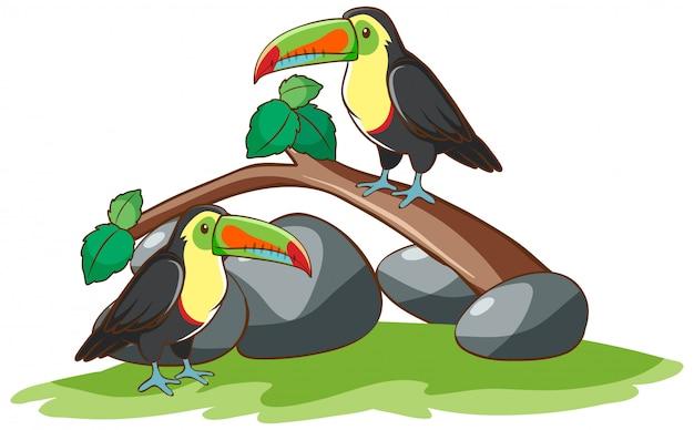 Disegnato a mano isolato di due uccelli tucano