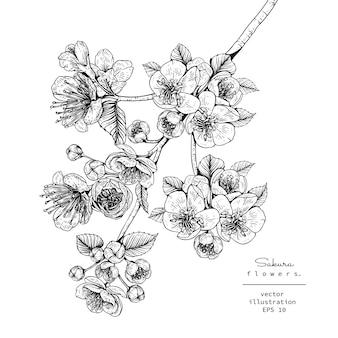 Disegni di fiori di ciliegio sakura