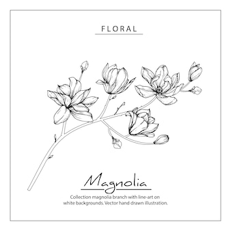 Disegni di fiori di magnolia. illustrazioni botaniche disegnate a mano dell'annata.