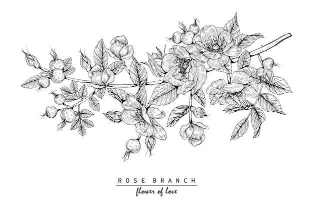 Disegni di fiori di rosa