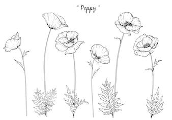 Disegni di foglie e fiori di papavero.