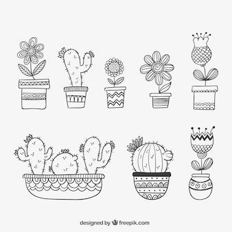 Disegno a mano le piante tracciati