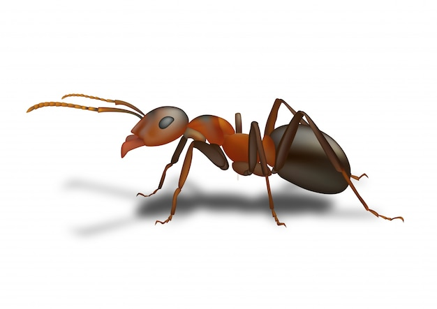 Disegno della formica