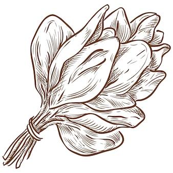 Disegno della mano di schizzo di vettore del mazzo degli spinaci