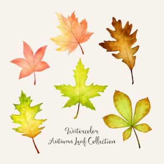 Disegno di foglie autunnali acquerello