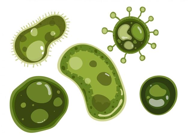 Disegno vettoriale di batteri