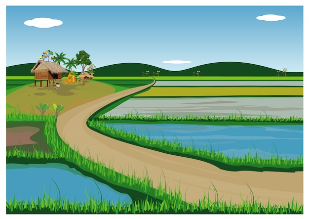 Disegno vettoriale di campo di risaia