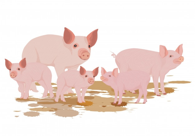 Disegno vettoriale di cinque porcellini