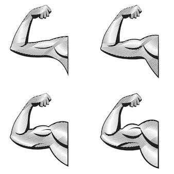 Diverse braccia con bicipiti contratti. illustrazione dei muscoli in stile incisione.